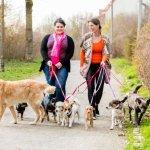 Women walking dogs