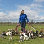 A lady walking the dogs on the field